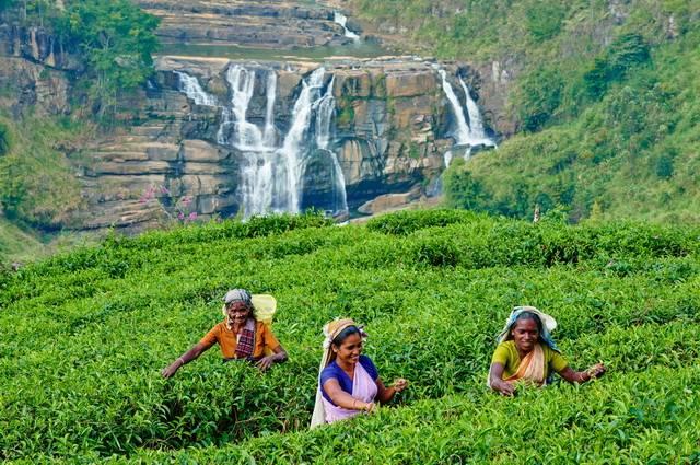 rencontres à Kandy Sri Lanka