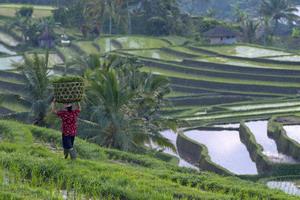 Circuit organisé en groupe - Promotions - Bali - Indonésie - Offre Spéciale Bali