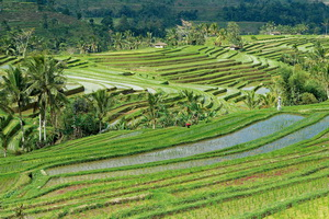 Circuit organisé en groupe - Bali - Indonésie - Bali Essentiel