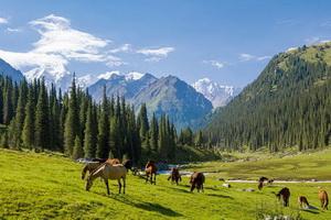 Circuit organisé en groupe - Kirghizistan - Ouzbékistan - Caravaniers et Cavaliers - Ouzbékistan, Kirghizistan
